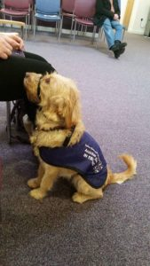 assistance dog a life of lovely