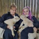 lambs photo