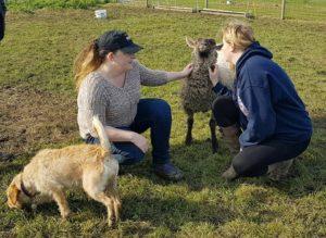 friendly sheep image