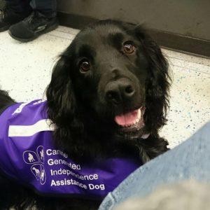 assistance dog uk