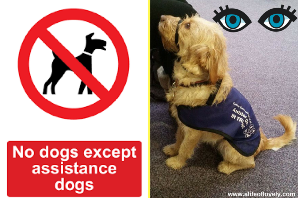 open your eyes assistance dogs