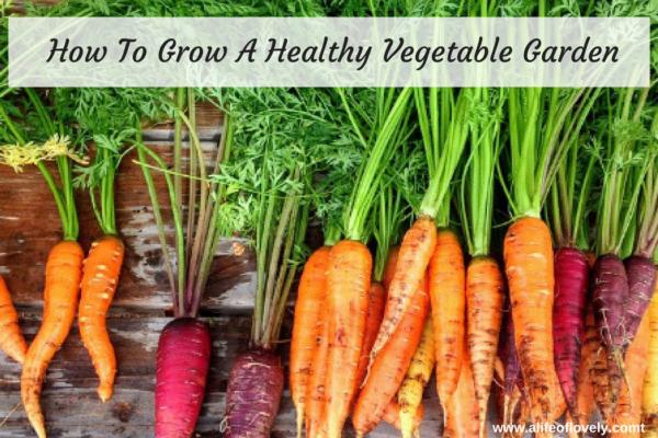 how to grow a healthy vegetable garden