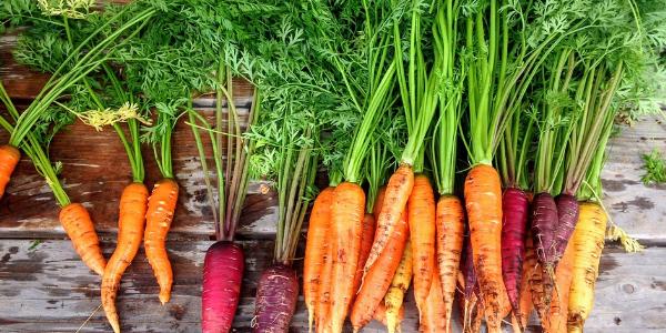 colourful fresh vegetables