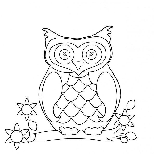 owl colouring in picture