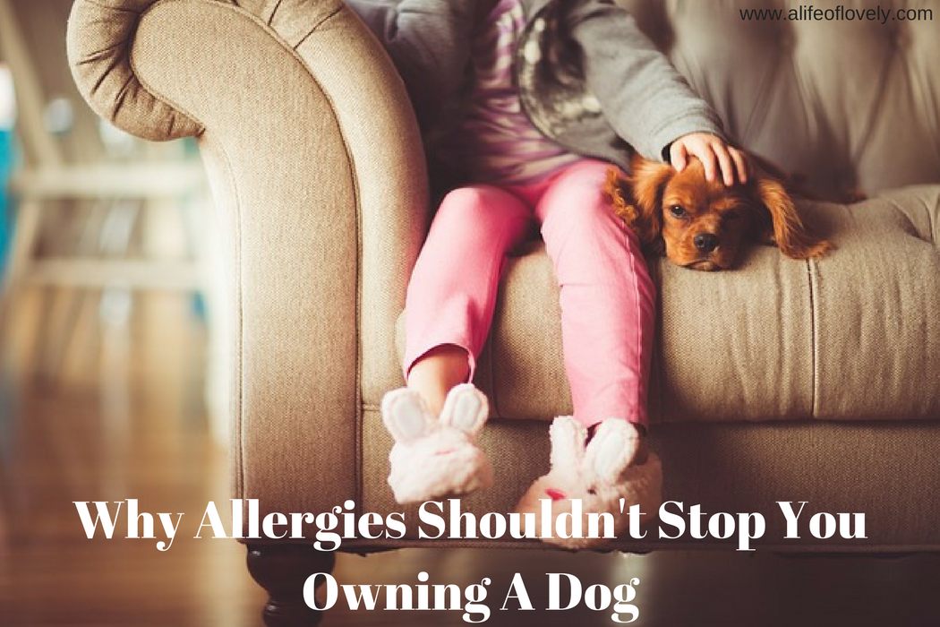Why Allergies Shouldn't Stop You Owning A Dog