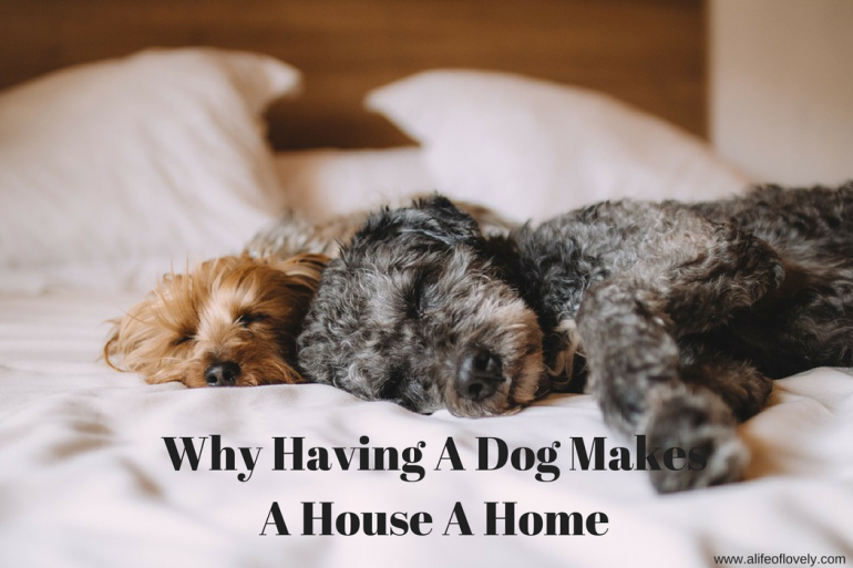 Why Having A Dog Makes a House a Home