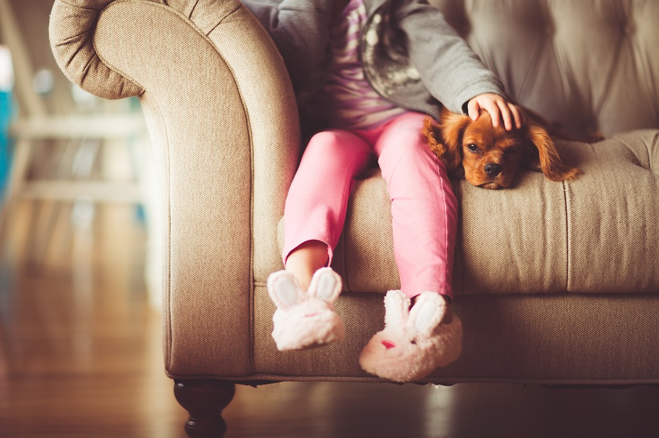dog on sofa with girl