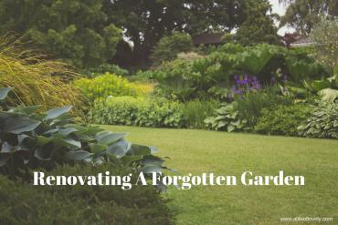 Renovating A Forgotten Garden