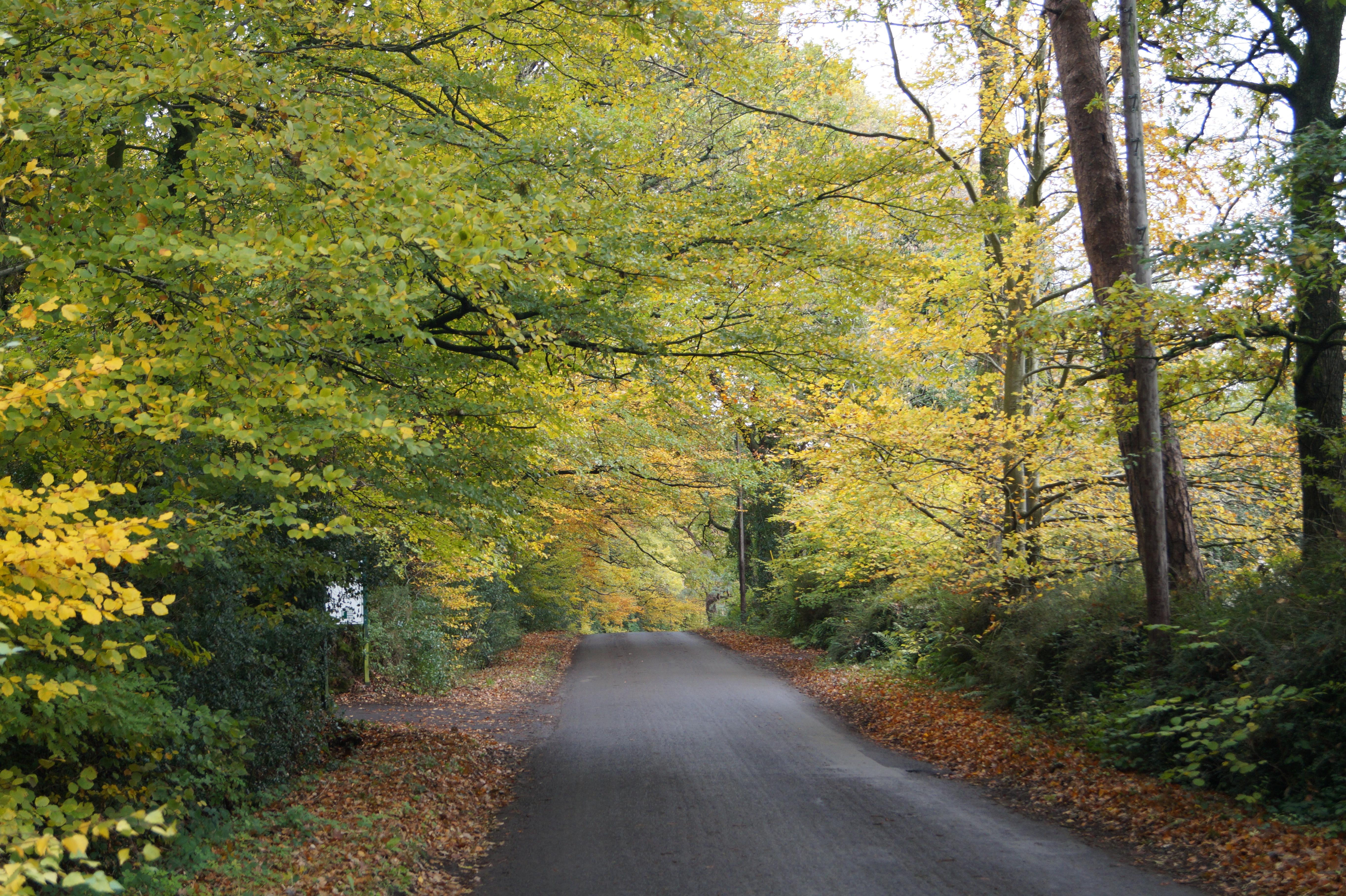 autumn in Somerset