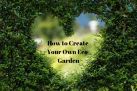 How to Create Your Own Eco-Garden