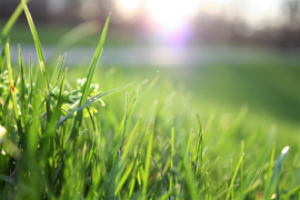 Is Artificial Grass Right for You?