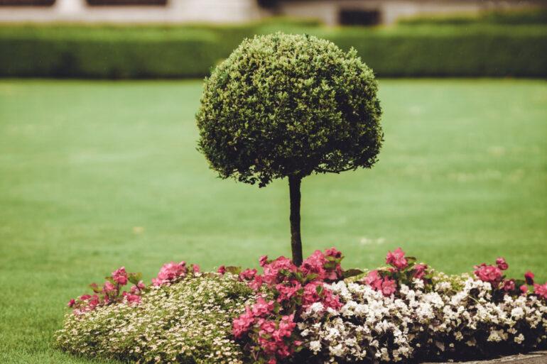 5 Ideas to Improve Your Garden