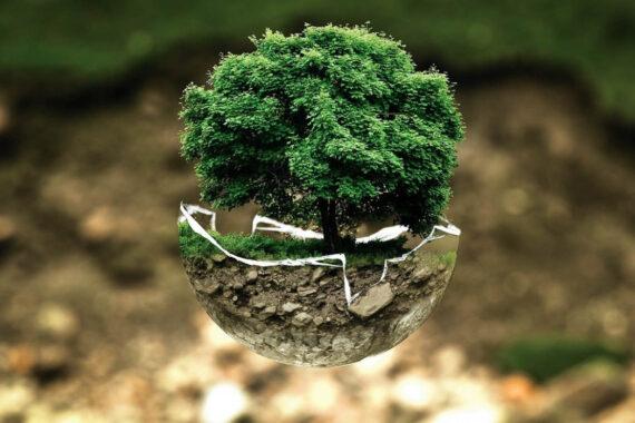 5 Modern Garden Practices That Promote Environmental Conservation