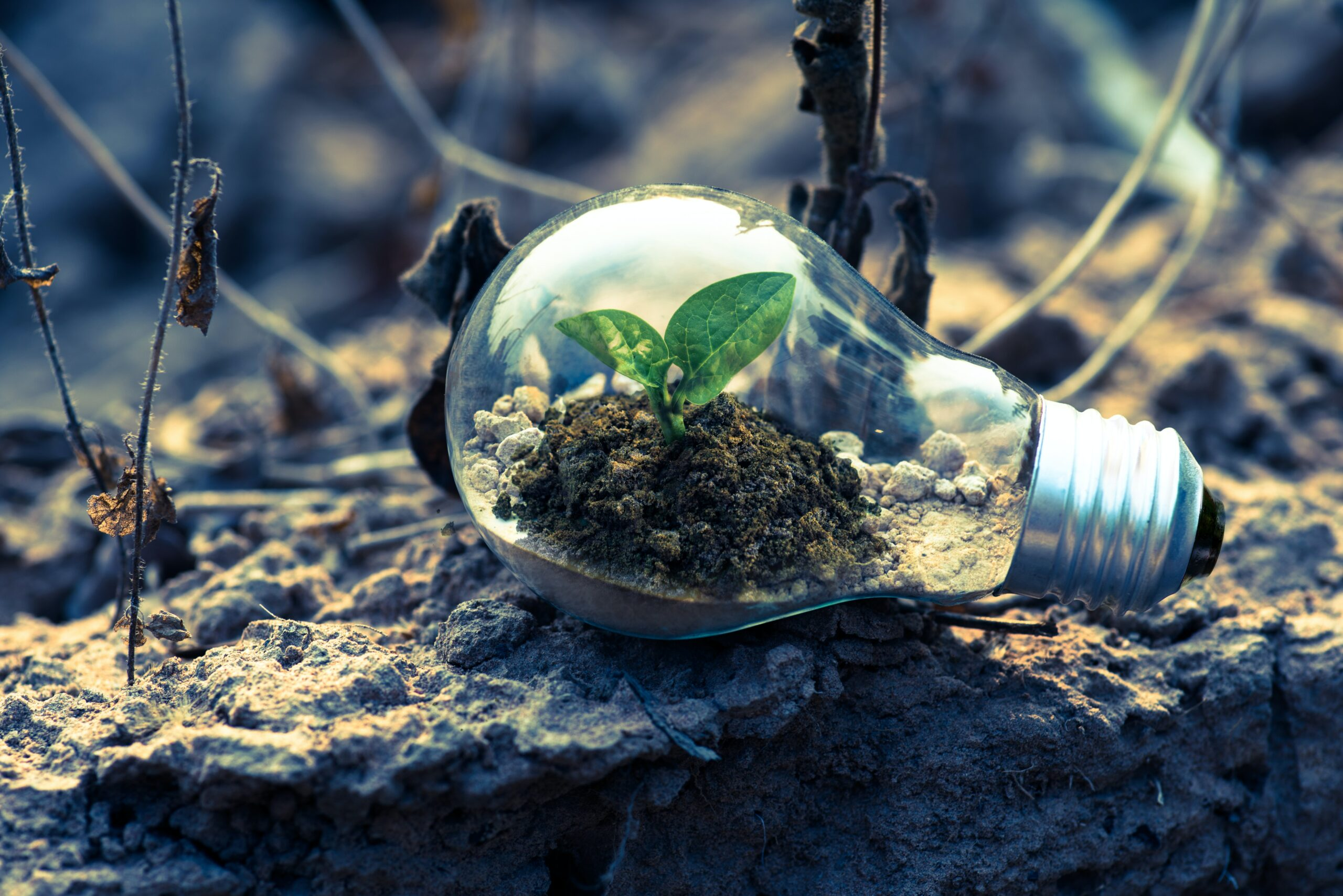 eco system in a lightbulb