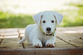 Advice For Bringing A Dog Into Your Home For The First Time
