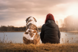 Tips on How to Thank Your Dog for all the Love